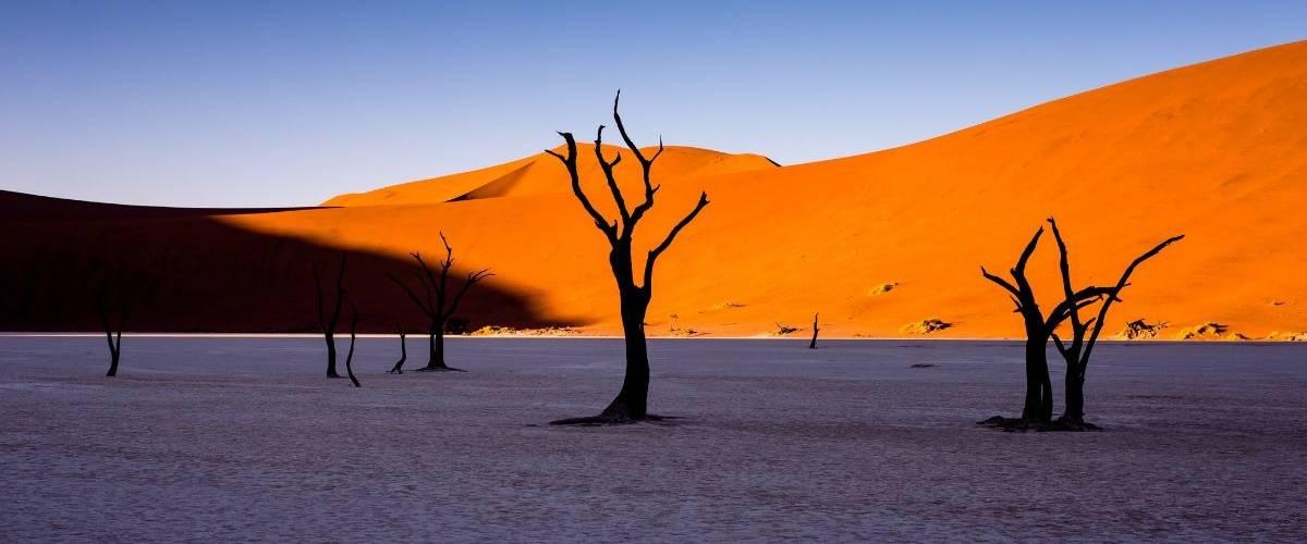 Un désert aride