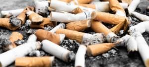 Les mégots de cigarettes empêchent les plantes de pousser