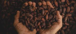 Nestlé élabore à une barre chocolatée à base de déchets de cacao