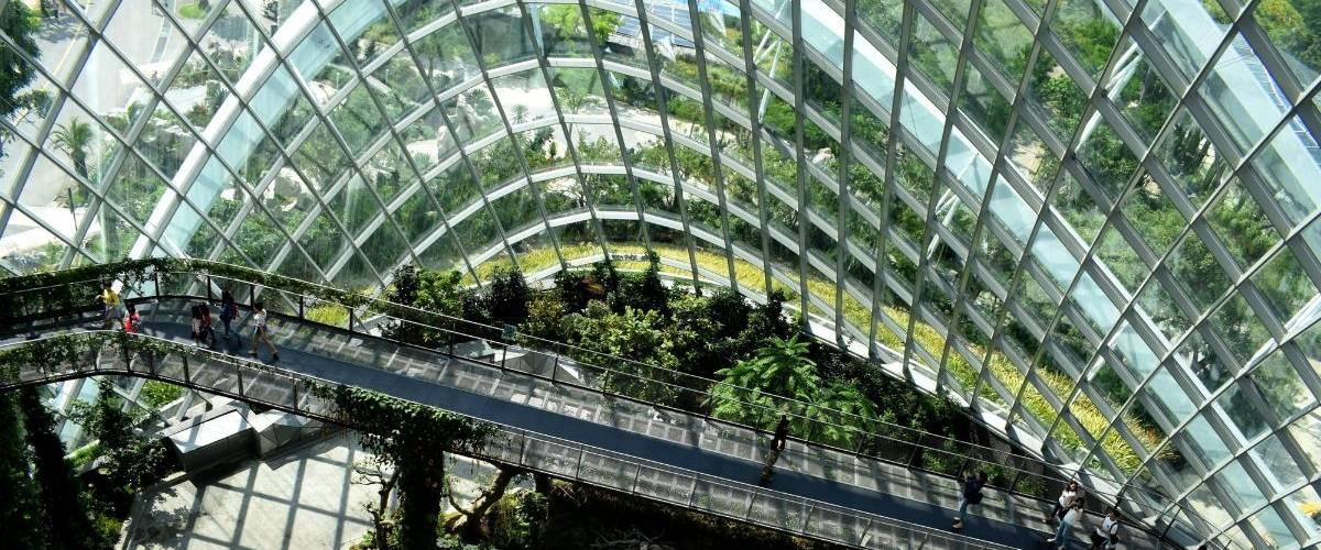 Une passerelle surplombe des plantes et arbres