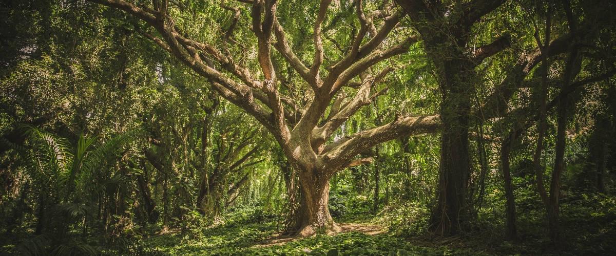 Un arbre dans la forêt