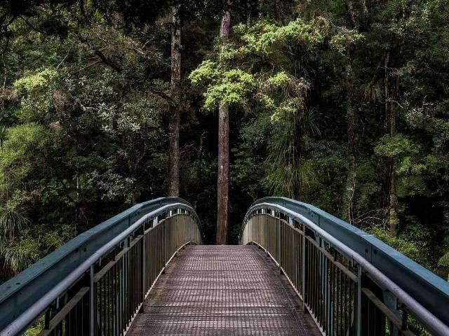 Un pont et une forêt