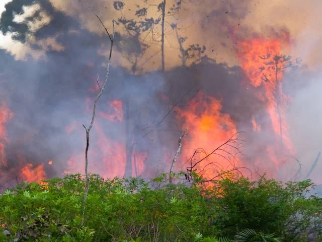 Incendie dans la forêt au Brésil.