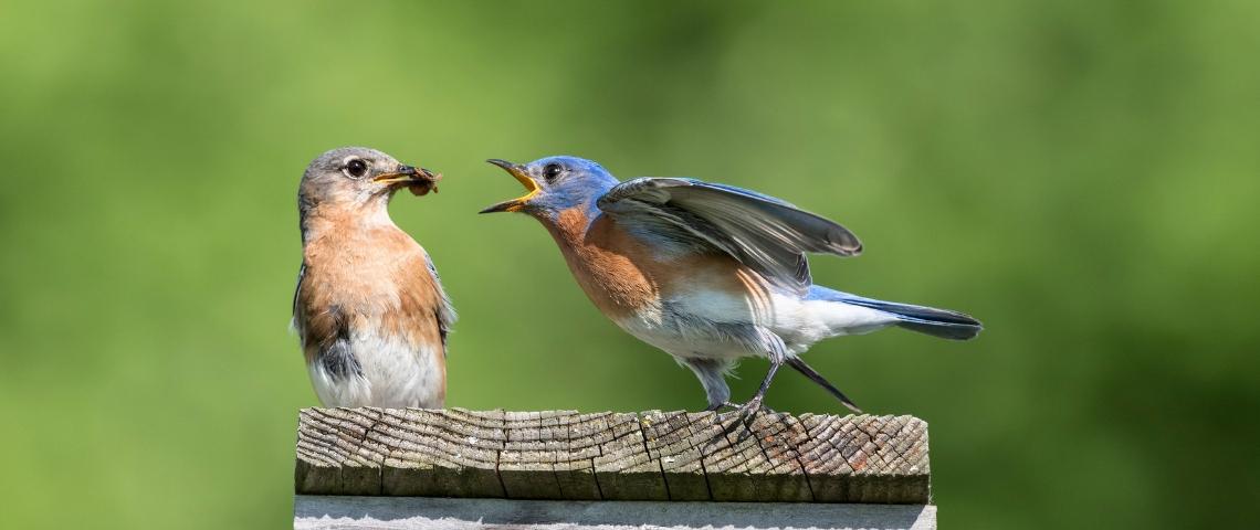 Deux oiseaux qui se battent