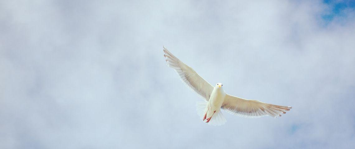 Visuel d'une colombe