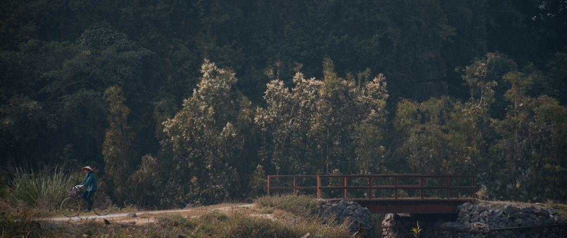 Photo d'une forêt avec une personne qui se promène en vélo