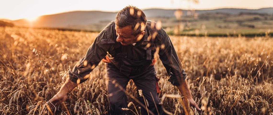 Un paysant dans un champ de blé