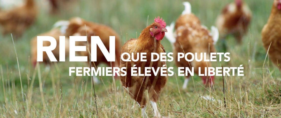 Poulets en liberté avec le message : Rien des poulets élevès en liberté