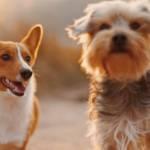 Deux chiens courent dans la nature