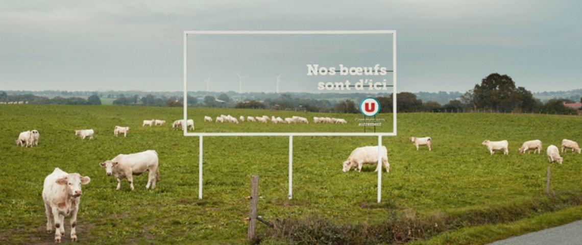 Panneau transparent qui laisse b=voir les boeufs qui sont dans le champ derrière, avec l'inscription : Nos Boeufs sont d'ici