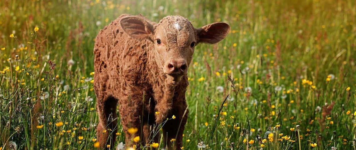 « Meat the family » : la télé réalité qui propose de manger son animal ou devenir végétarien