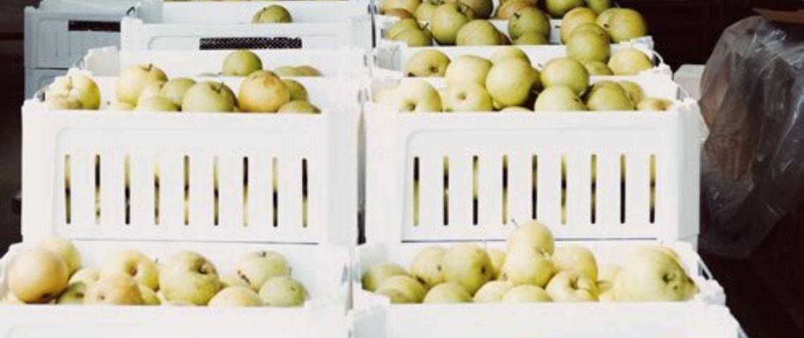 pommes vertes dans bacs blancs recyclables