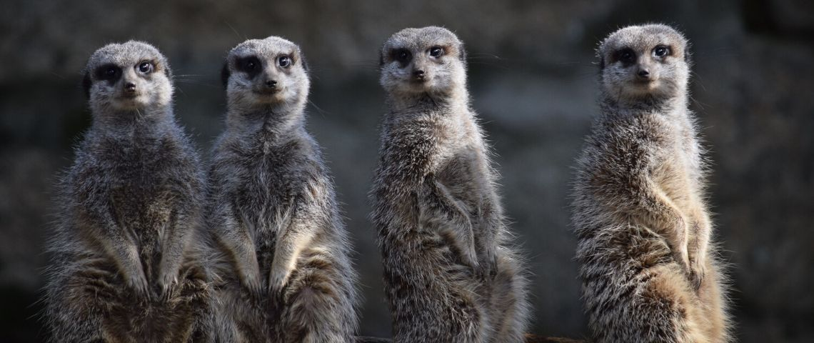 REWILD vient acheter un zoo pour ré-ensauvager le monde de réalise ainsi une première mondiale