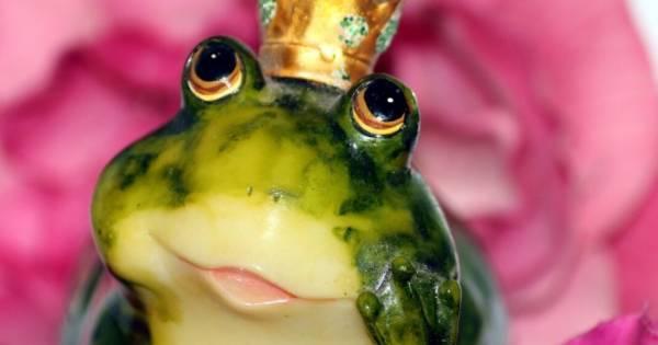 grenouille site de rencontre)