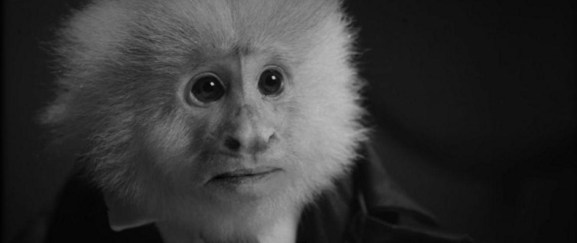 un singe noir et blanc