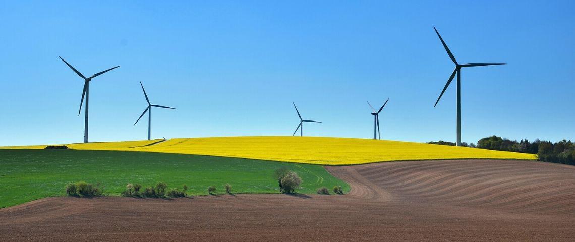 Champ avec des éoliennes dans le fond