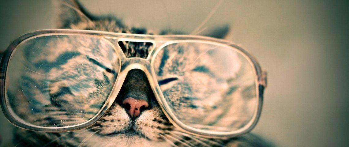 Chat portant des lunettes