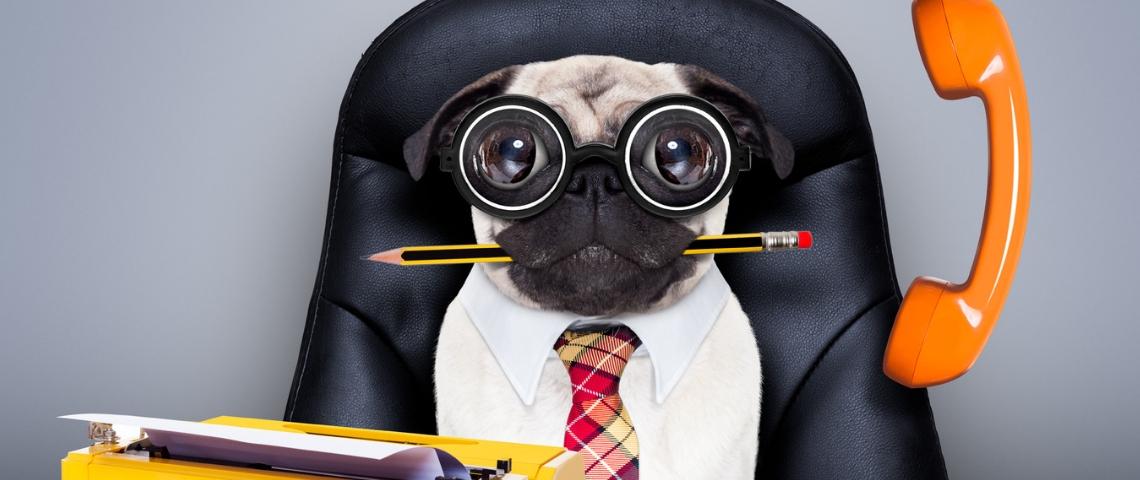 Un chien en train de manger un stylo portant des lunettes