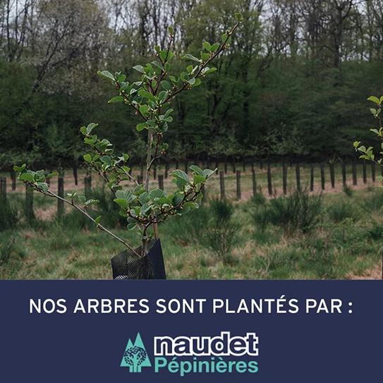 Capture d'écran du site Faguo qui indique que les arbres sont plantés avec Naudet Pépinières