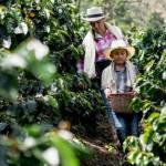 Un enfant et une femme dans un champ de café