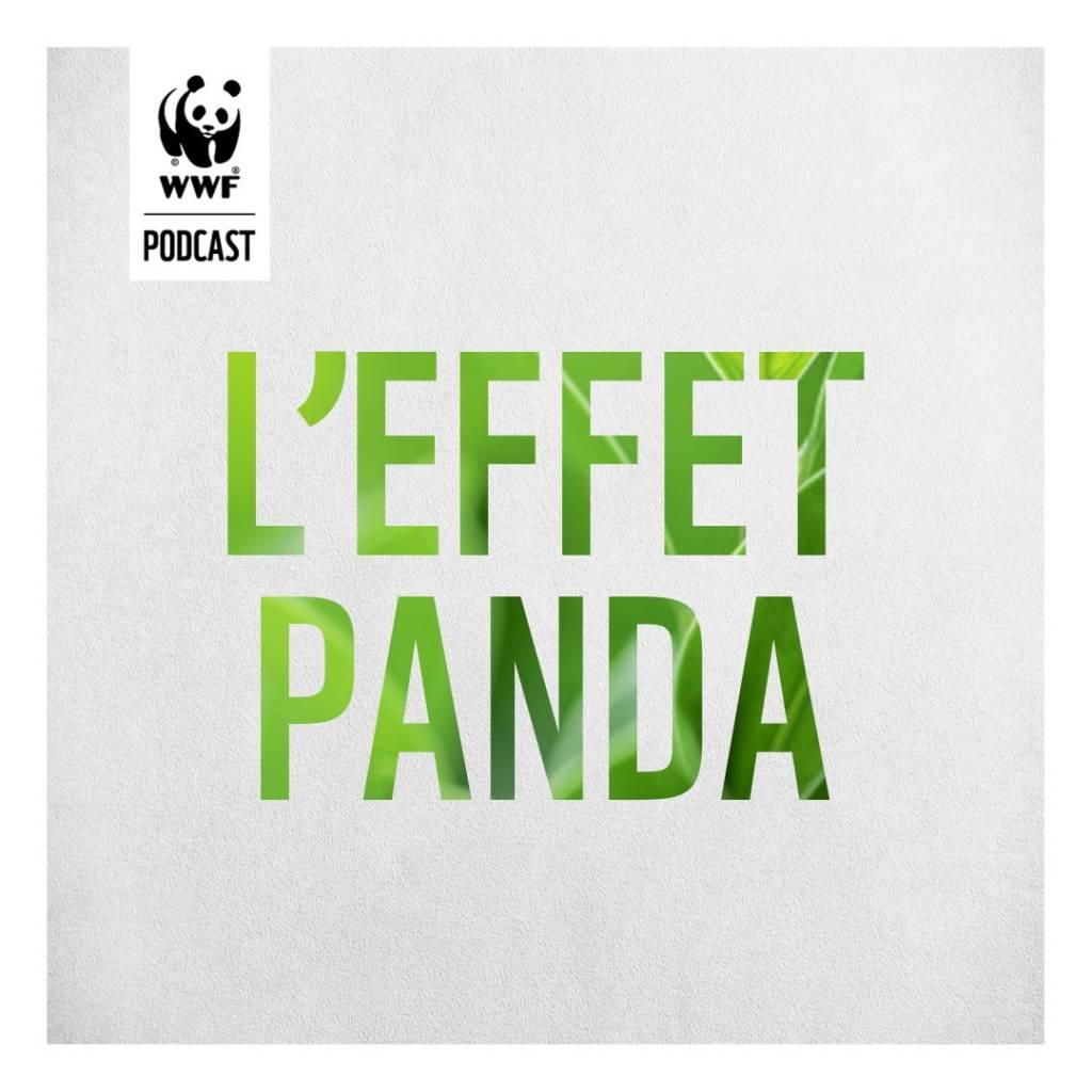 Logo l'Effet Panda