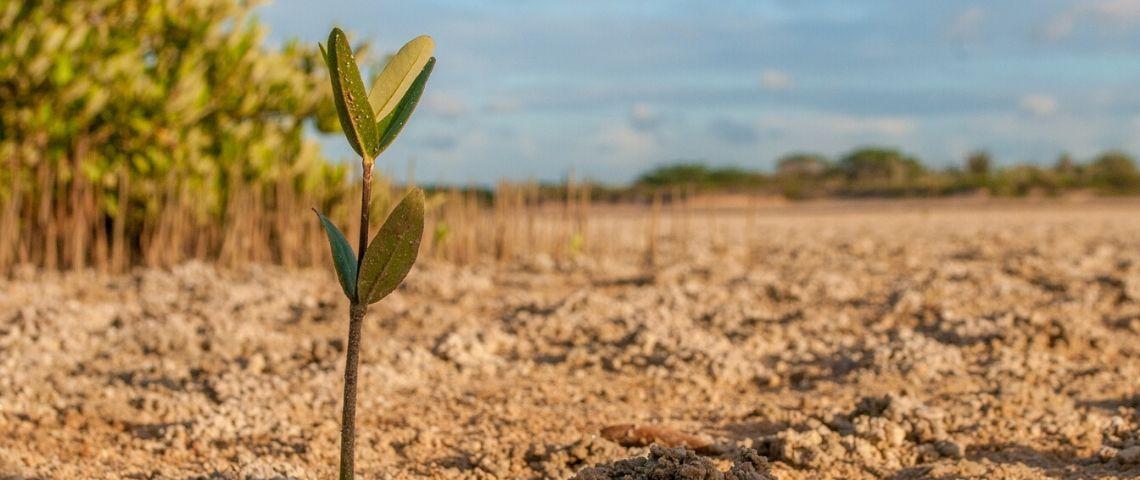 ForumConstruire.com plante 10 000 arbres en Indonésie