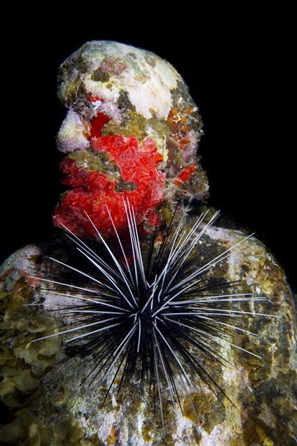 sculpture rouge immergée sous l'eau
