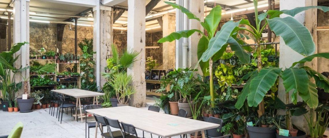 Végétaliser les espaces de travail