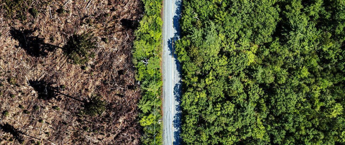 Vue arrière de la déforestation