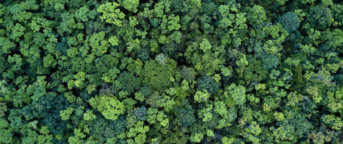 Bonne nouvelle : l'empreinte carbone de notre consommation a baissé de deux tiers
