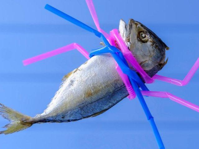 Un poisson étranglé par des pailles en plastique