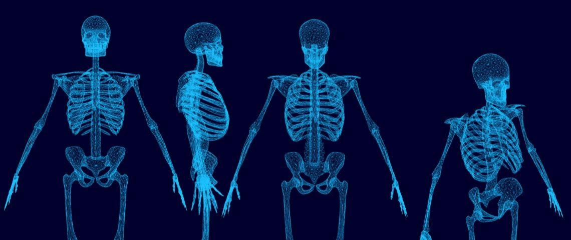 des squelettes humains
