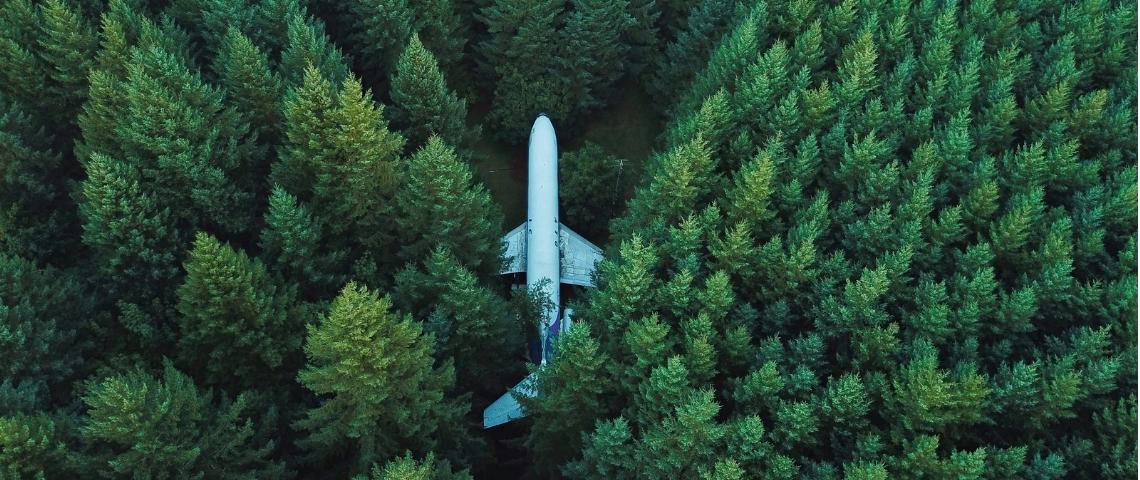 Un avion dans une forêt