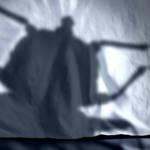l'ombre d'un insecte sur un oreiller