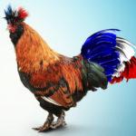 Un coq sur fond bleu avec une queue tricolore