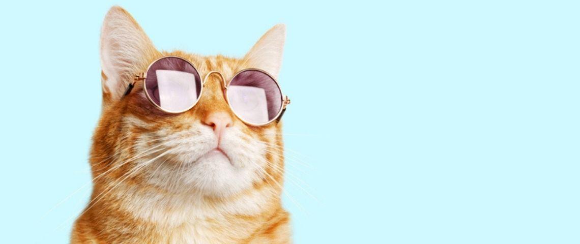 Un chat avec des lunettes
