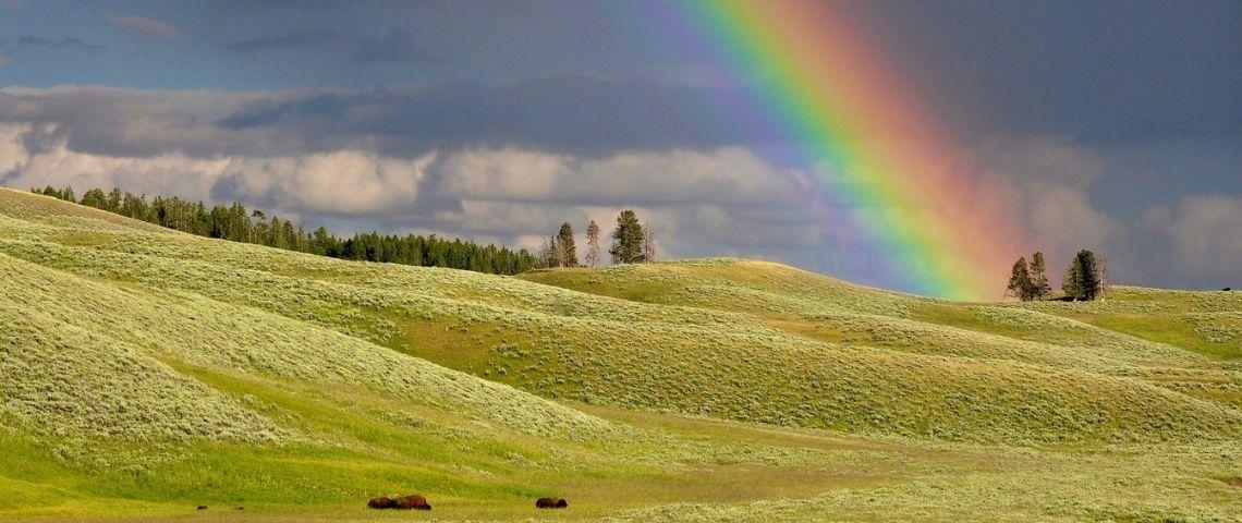 Arc en ciel sur une prairie
