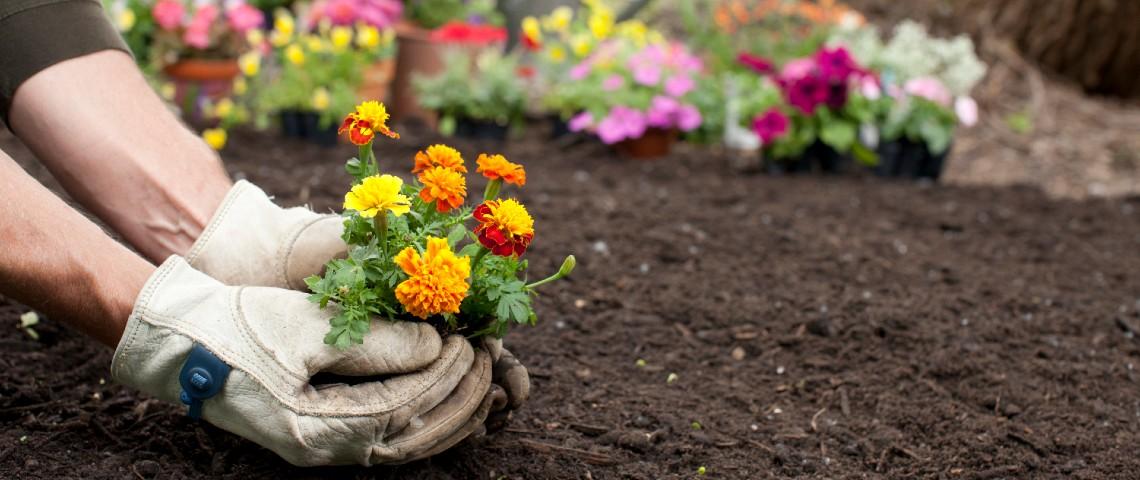 Une personne en train de planter des fleurs dans un jardin.