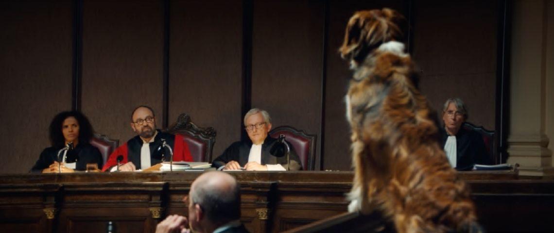 Chien devant des juges dans un tribunal