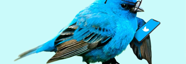 Oiseau bleu en train de regarder Twitter