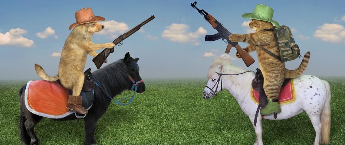 Duel de chien et chat armés sur poneys shetland