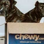 Deux chiens noirs dans une boîte en carton
