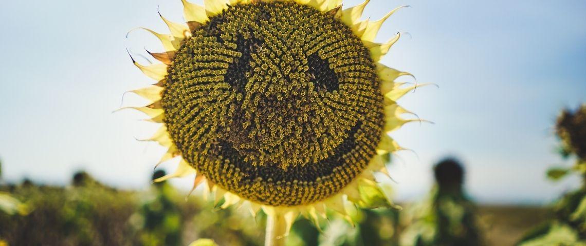 Marketing éthique : comment éviter le greenwashing et s'engager véritablement