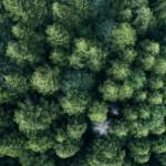 Une forêt de sapin vue du ciel