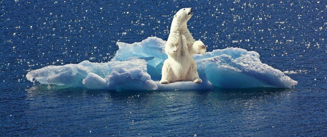 Ours polaire sur un iceberg dérivant