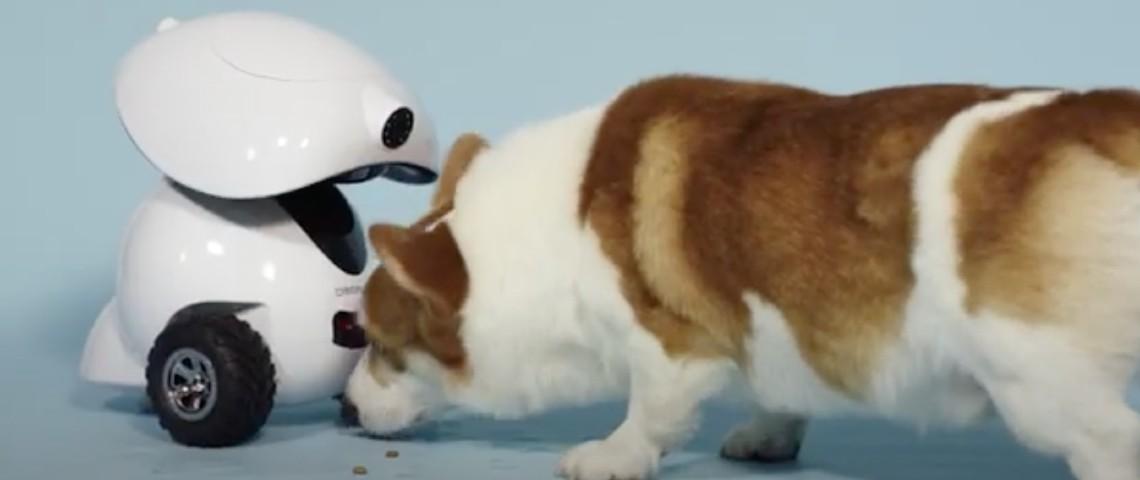 Robot Dogness iPet robot
