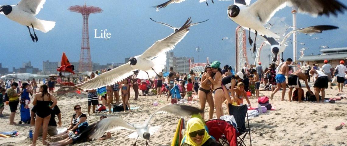 plage avec des gens et des mouettes