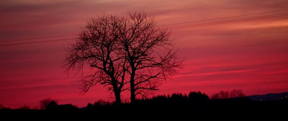 Un arbre devant un ciel rose