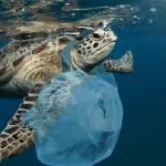 Tortue avec un sac plastique autour du cou