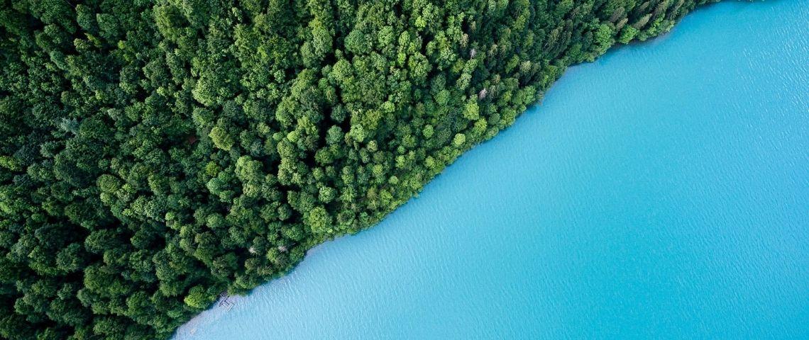 La forêt et la mer
